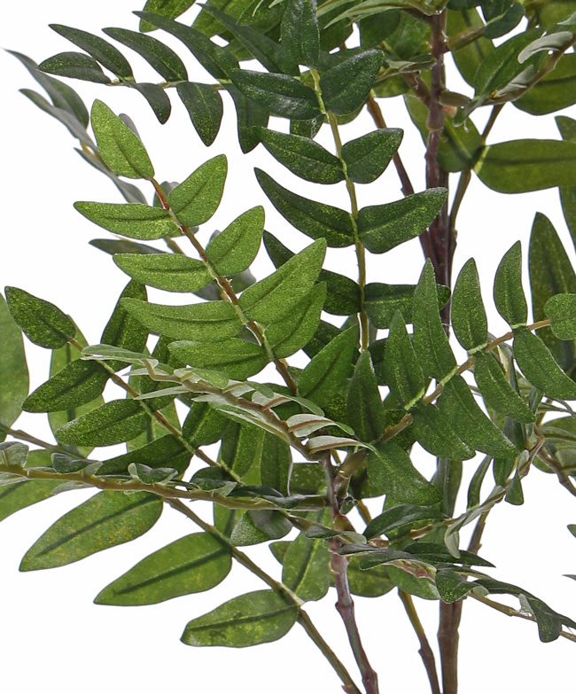 Lijsterbestak (Sorbus) met 10 uitlopers & 391 blad, 73cm
