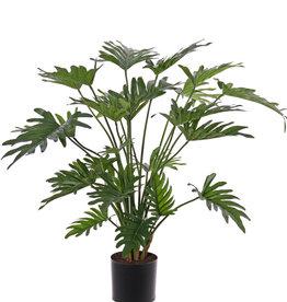 Philodendron selloum medium, met 28 blad (7*15/14*20/7*25cm), in pot, 75cm