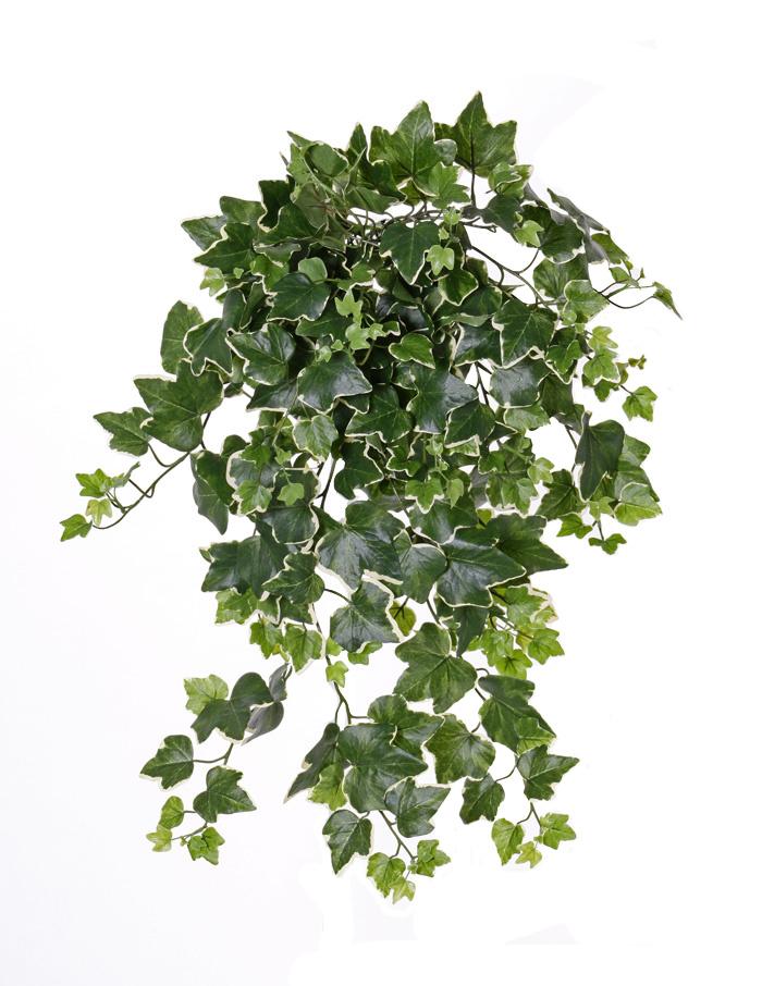 English Ivy hedera Gala x 262 65cm UV-safe