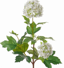 Viburnum, pequeño, 40cm, Ø 6cm, Ø 5cm