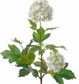 Viburnum - Schneeball -  klein, 40cm, Ø 6cm, Ø 5cm