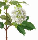 Viburnum 40cm