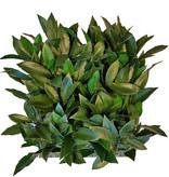 Laurier (Laurus) haagelement, 25 x 25cm, 193 blad, 2 tone groen, UV bestendig - ACTIE