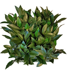 Bay leaf (Laurus) hedge element, 25 x 25cm, 193 lvs., 2 green tones, UV safe