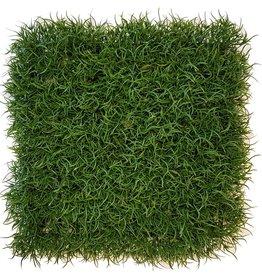 Gras wild, haagelement, 25 x 25 x 6cm, UV bestendig