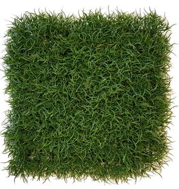 Grass wild, hedge element, 25 x 25 x 6cm, UVsafe