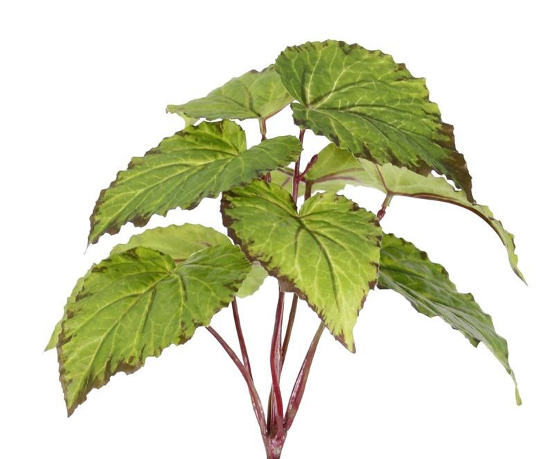 Begonia, 9 hojas, 25cm