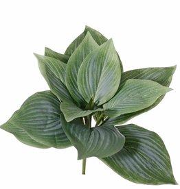 Hosta mit 12 Blättern, 25cm