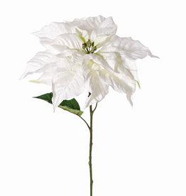 Poinsetia (Flor de Navidad, flor de nochebuena) 'De luxe', Ø 30cm & 2 hojas, 77cm