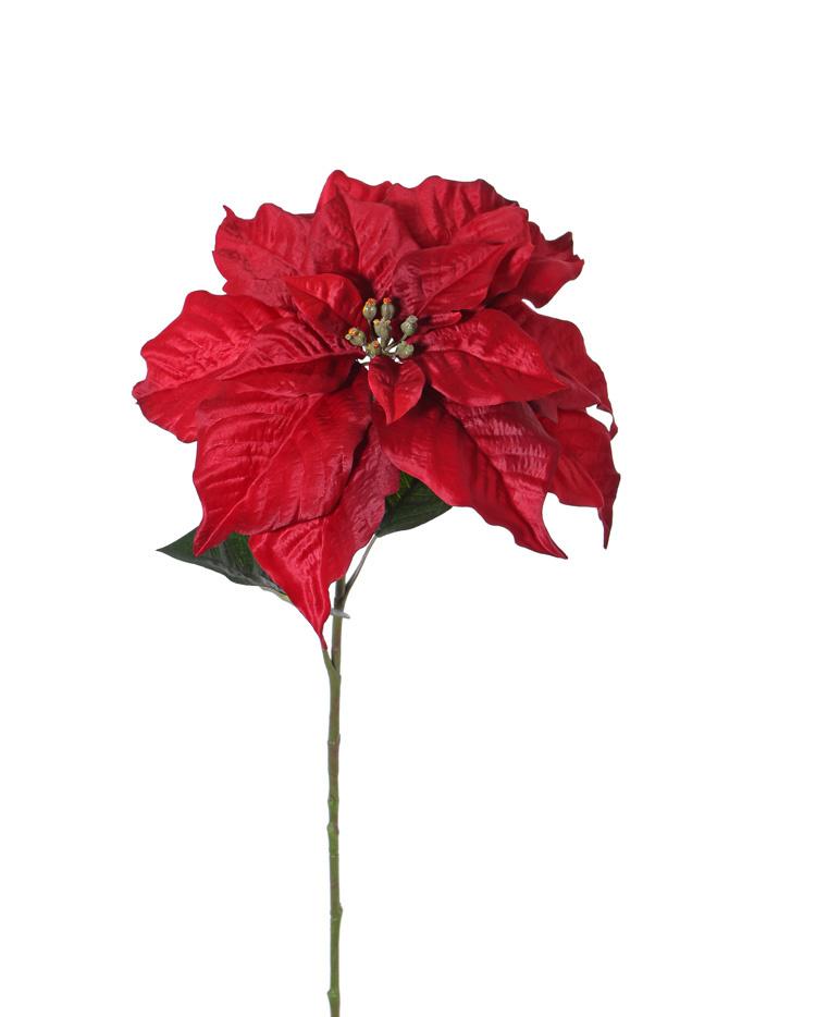 Poinsettia (Christmas Flower) 'De luxe', Ø 30cm & 2 lvs., 77cm
