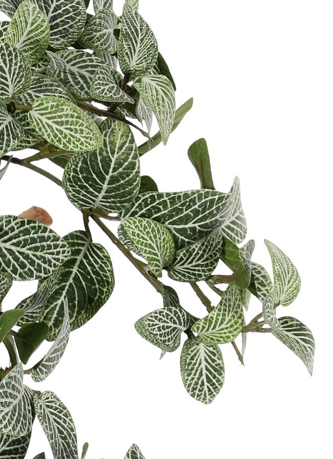 Fittonien (Fittonia), Silbernetzblätter, 15 Verzweigungen, 267 Blätter, schwer entflammbar und UV sicher, 50cm
