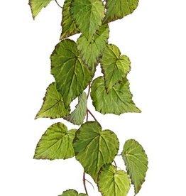 Begonia (Bladbegonia) slinger, 18 bladeren, 111cm