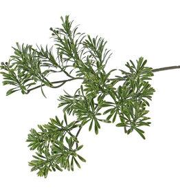 Wermut-Blattzweig, Artemisia absinthium, 25 Verzweigungen, 45cm - UV sicher