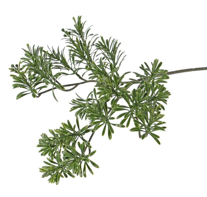 Artemisia absinthium, lastic 45cm - resistente de rayos UV