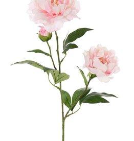 Pioenroos (Paeonia), 2 bloemen (Ø 13 en Ø 10cm), 1 knop & 16 blad, 73cm