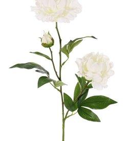 Peony with 2 flowers (Ø 13 and Ø 10cm), 1 bud & 16 lvs., 73cm