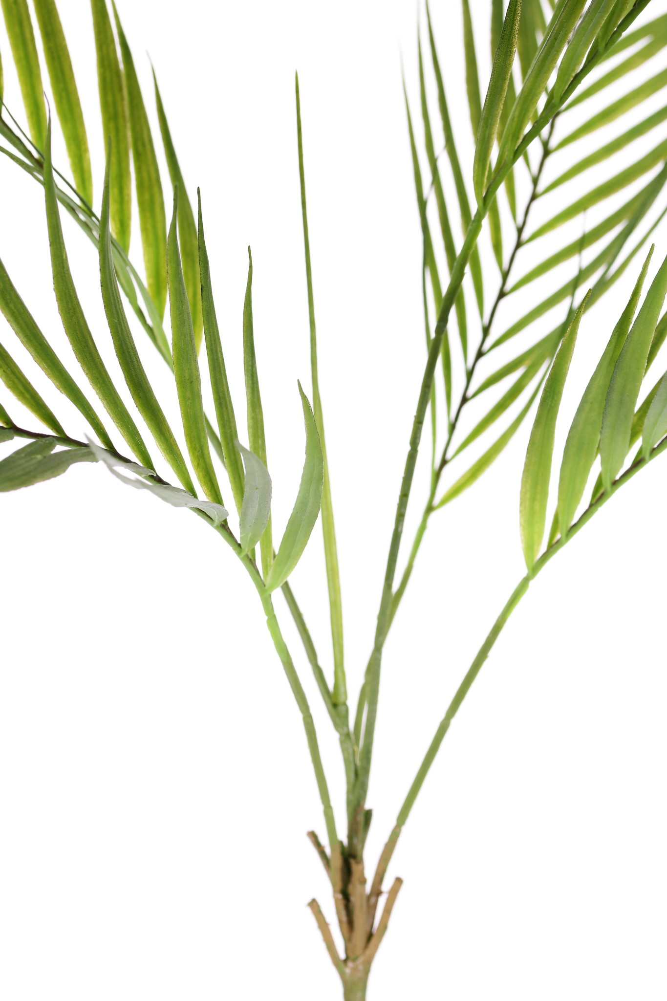 Areca palm (golden cane palm) bush, 5 palm fronds, 'Feel Real', 76cm