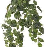 Fittonia, 'Top Green', 178 hojas, resistente del fuego y de rayos UV, 75cm