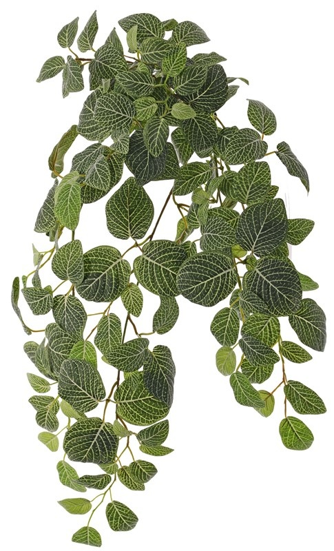 Fittoniahanger (Mozaiekplant), 'Top Green', x9 & 178 blad, FR & UVsafe, 75cm
