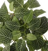 Fittonia (Silbernetzblätter), 'Top Green', 9 Verzweigungen, 178 Blätter, schwer entflammbar & UV-sicher, 75cm