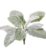 Salvia blanca (Salvia argentea) planta, 11 hojas, 25cm