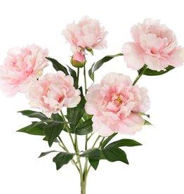 Pioenboeket (Paeonia) x6, 5 bloemen, 1 knop & blad, 45cm, Ø 30cm