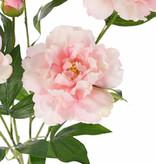 Peonia , 5 flores, 1 capullo & hojas, 45cm, Ø 30cm