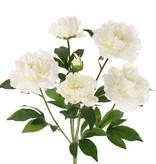 Pfingstrosen mit 6 Verzweigungen, 5 Blumen, 1 Knospe & Blatt, 45cm, Ø 30cm