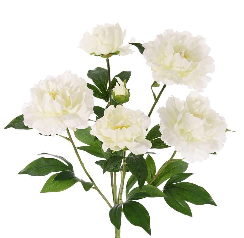 Pioenroos (Paeonia) x6, 5 bloemen, 1 knop & blad, 45cm, Ø 30cm