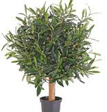 Olivenbaeumchen 50cm