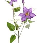Klematis (Waldreben) 'GardenArt', 2 Blumen, 1 Knospe, 9 Blätter, 76cm