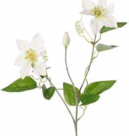 Clematis (clemátide) 'GardenArt', 2 flores, 1 brote,  9 hojas, 76 cm