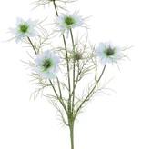 Nigella (Persian jewel), 4 flowers & 2 buds, 15 sets of leaves, 66cm