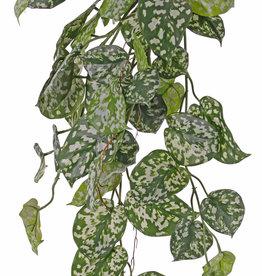 Scindapsus (Epripremnum), Gefleckte Efeutute, Hängepflanze, 60 Blätter & Ausläufer, 72 cm, UV sicher
