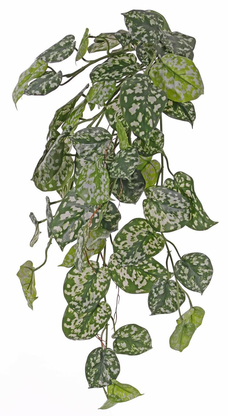 Scindapsus (Epripremnum) hanging plant, 60 lvs., 72 cm, UV safe