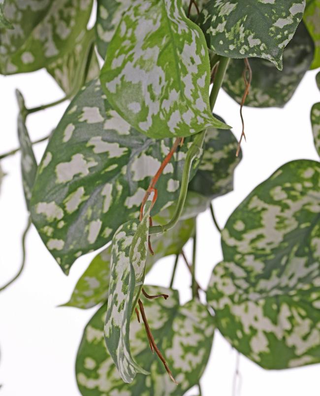 Scindapsus (Epripremnum) hangplant, 60 blad & uitlopers, 72cm, UV bestendig