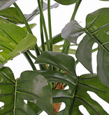 Monstera deliciosa (cheese plant), 15 leaves, FR & UVsafe, 40cm