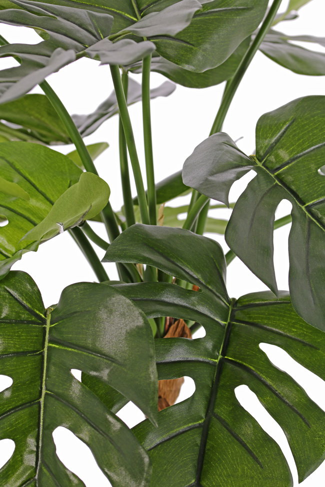 Monstera, Köstliches Fensterblatt, 15 Blätter, schwer entflammbar & UV sicher, 40 cm