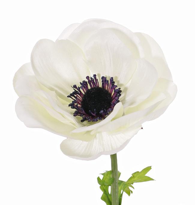 Anemoon (Anemone MIA), 1 bloem (Ø 11cm) & 3 blad, 43cm