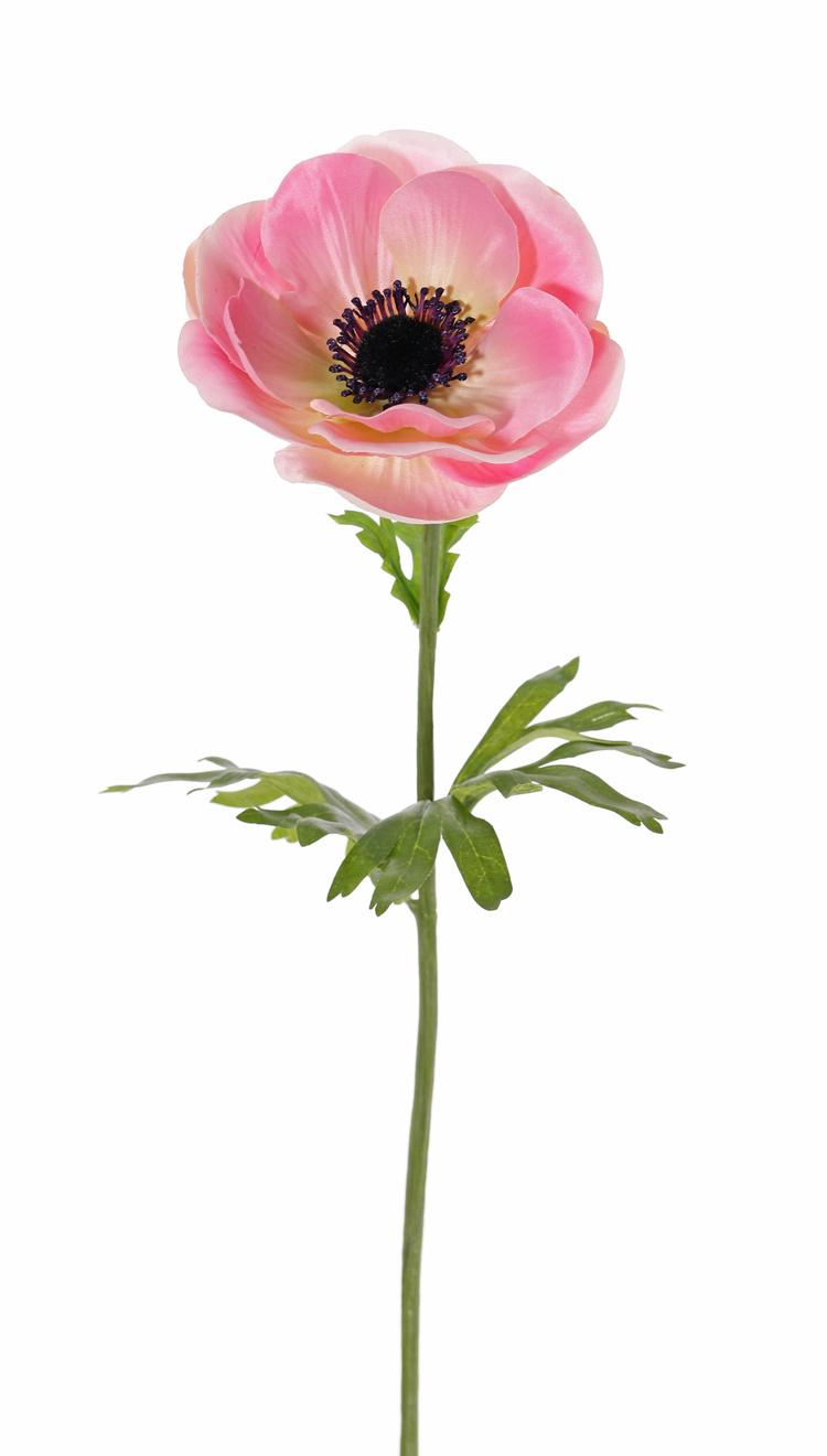 Anémona (Anemone MIA), 1 flor (Ø 11cm) & 3 hojas, 43cm