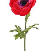 Anemone (Anemone MIA), 1 flower (Ø 11cm) & 3 lvs., 43cm