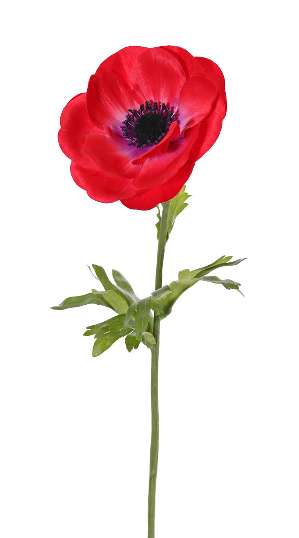 Anemone (Anemone MIA), 1 Blume, (Ø 11cm) & 3 Blätter, 43cm