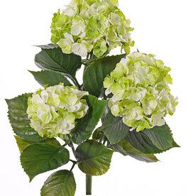 Hortensia (Hydrangea), 'All weather', 3 bloemtrossen (141 bloemen) & 27 blad, 43cm