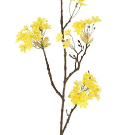 Maple tree flower branch (Acer), 6 clusters of flowers, 70cm