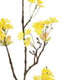 Acer bloesemtak (Esdoorn), 6 clusters met bloemen, 70cm