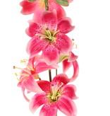 Flor de lis (Lilium) con 5 flores (Ø 8cm) & 4 brotes, 64cm
