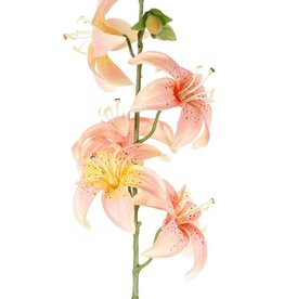 Lily (Lilium) with 5 flowers (Ø 8cm) & 4 buds, 64cm
