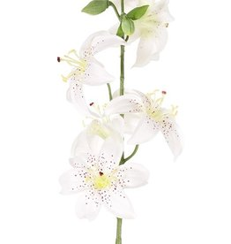 Flor de lis (Lilium) con 5 flores (Ø 8cm) & 4 capullos, 64cm