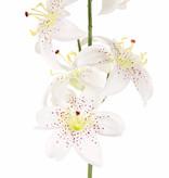 Lelie (Lilium) met 5 bloemen (Ø 8cm) & 4 plastic knoppen, 64cm