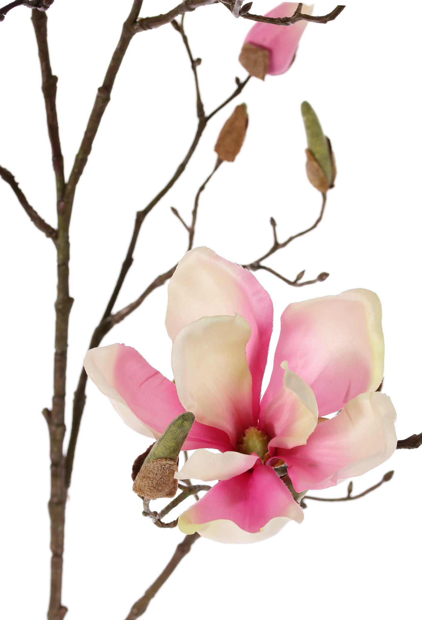 Magnolia branch with 4 flowers, 22 buds, 107cm